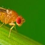 ruido-sordas-moscas